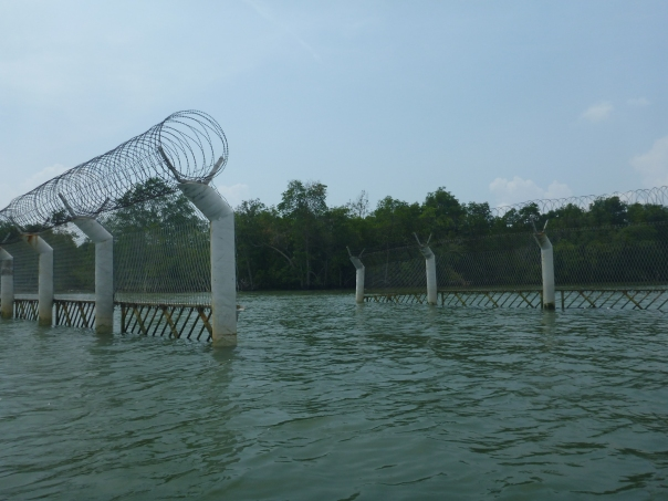 Finding the whole in the fence to access the mangroves and the river mouth entrance