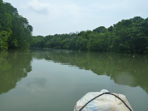 Paddling through the mangroves - I imagined we could have been in the Amazon!