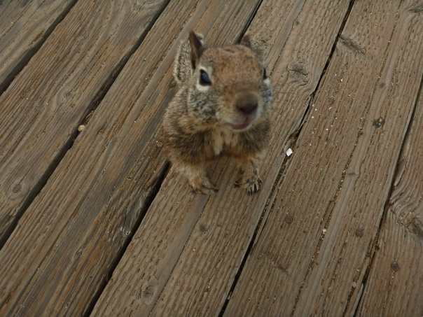 This little fella was very friendly - not shy at all and came right up to me looking for food.