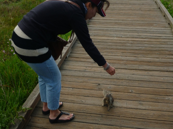 A possum meets a ground squirrel in Cambria.