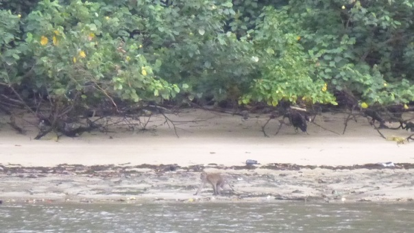 This monkey came down to the beach to check me out as I paddled past.