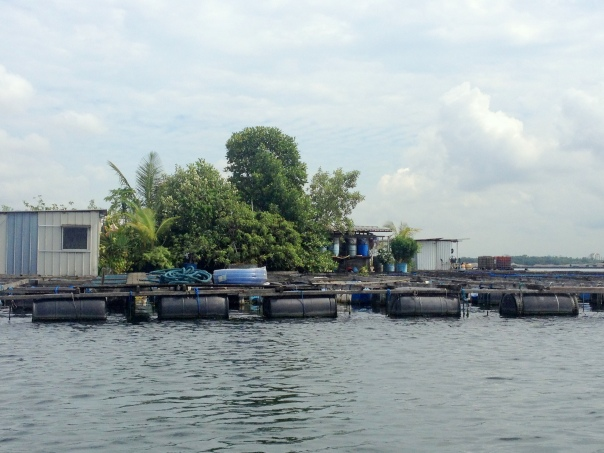 A fish farm with a lavish green floating garden.