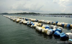 Have you ever seen so many drums? These are used to support the nets for the fish farms