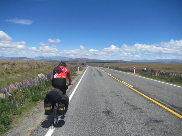 Alan Silva, cycling towards Lake Pukaki in strong headwinds alongside fields of colorful Lupin.